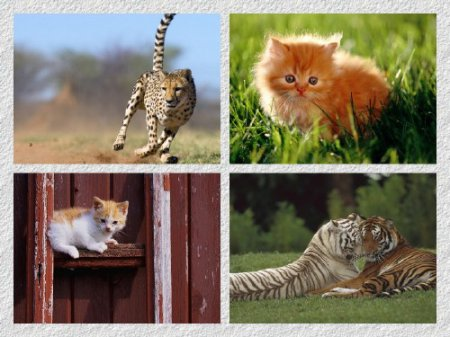 40 Stunning Animals HD Wallpapers 1366 X 768 [Set 8]